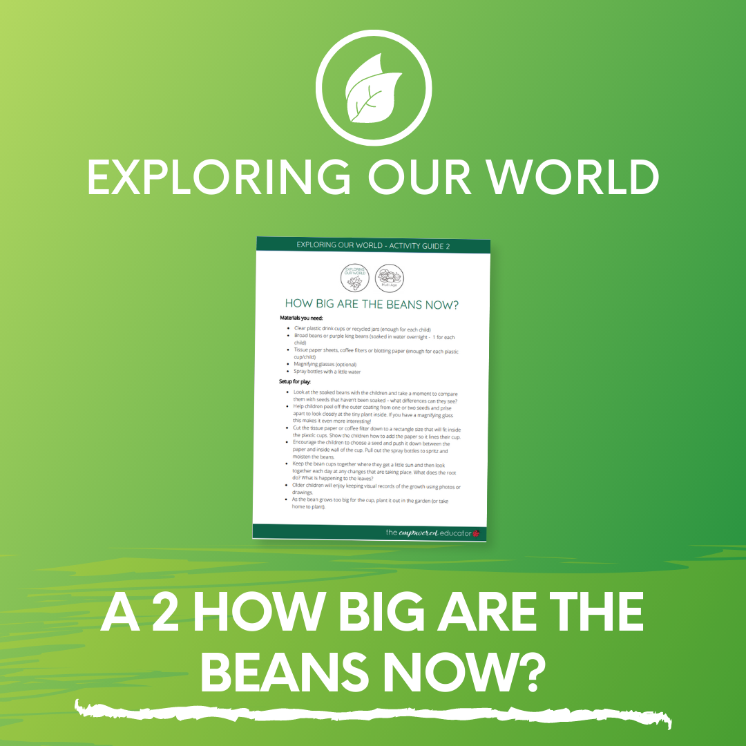 A 2 How Big are the Beans Now?